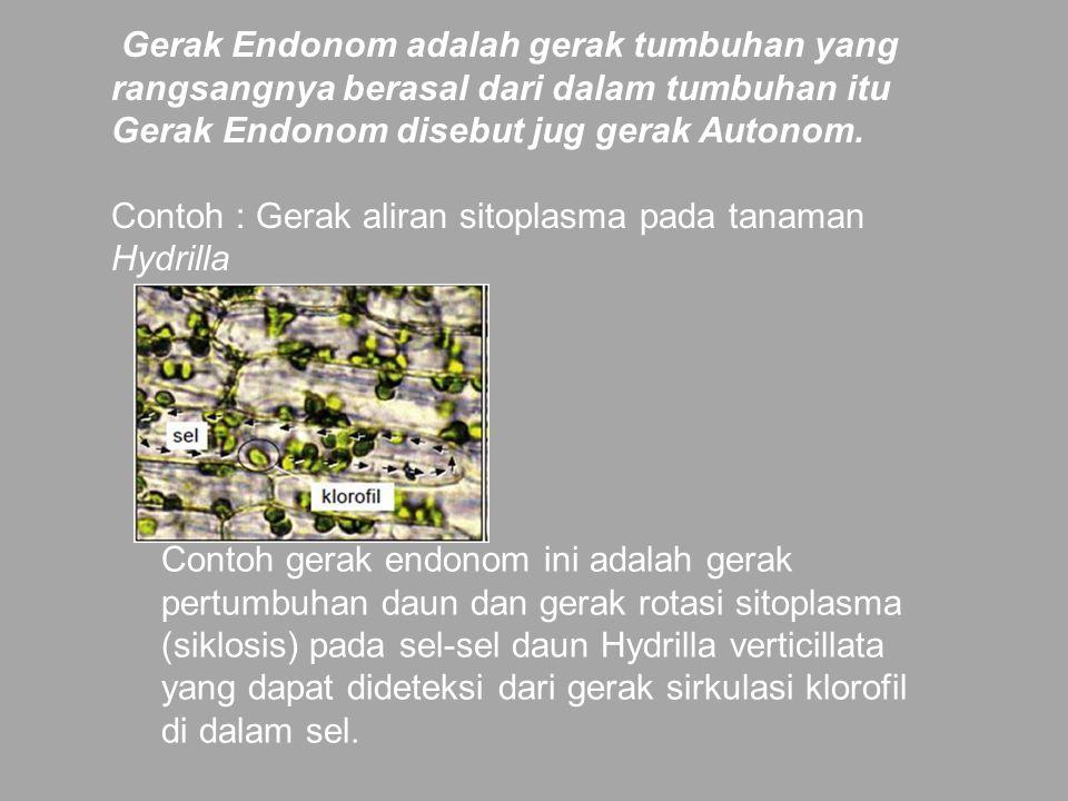Gerak Endonom adalah gerak tumbuhan yang rangsangnya berasal dari dalam tumbuhan itu Gerak Endonom disebut jug gerak Autonom. Contoh : Gerak aliran sitoplasma pada tanaman Hydrilla