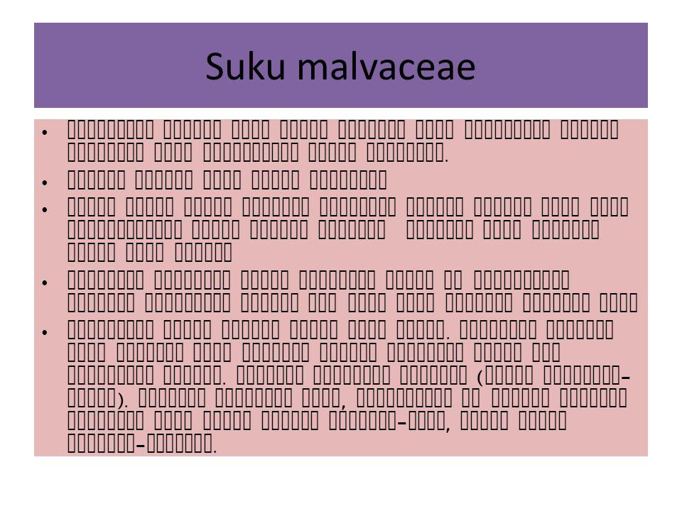 Suku malvaceae Malvaceae adalah suku kapas kapasan yang dicirikan adanya epycalyx pada perbungaan jenis jenisnya.