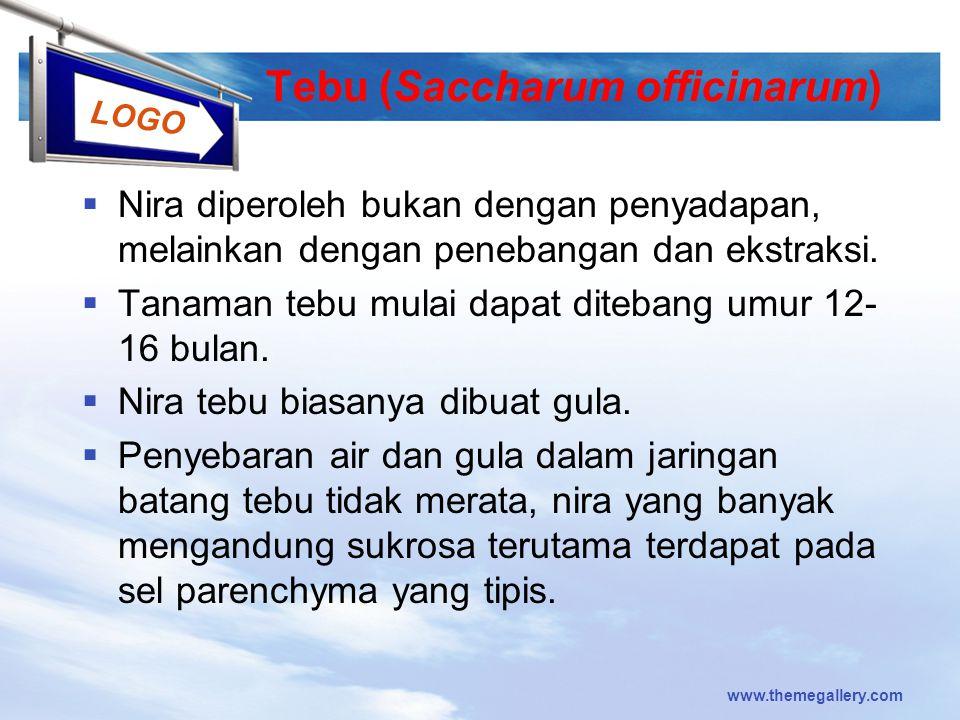 Tebu (Saccharum officinarum)