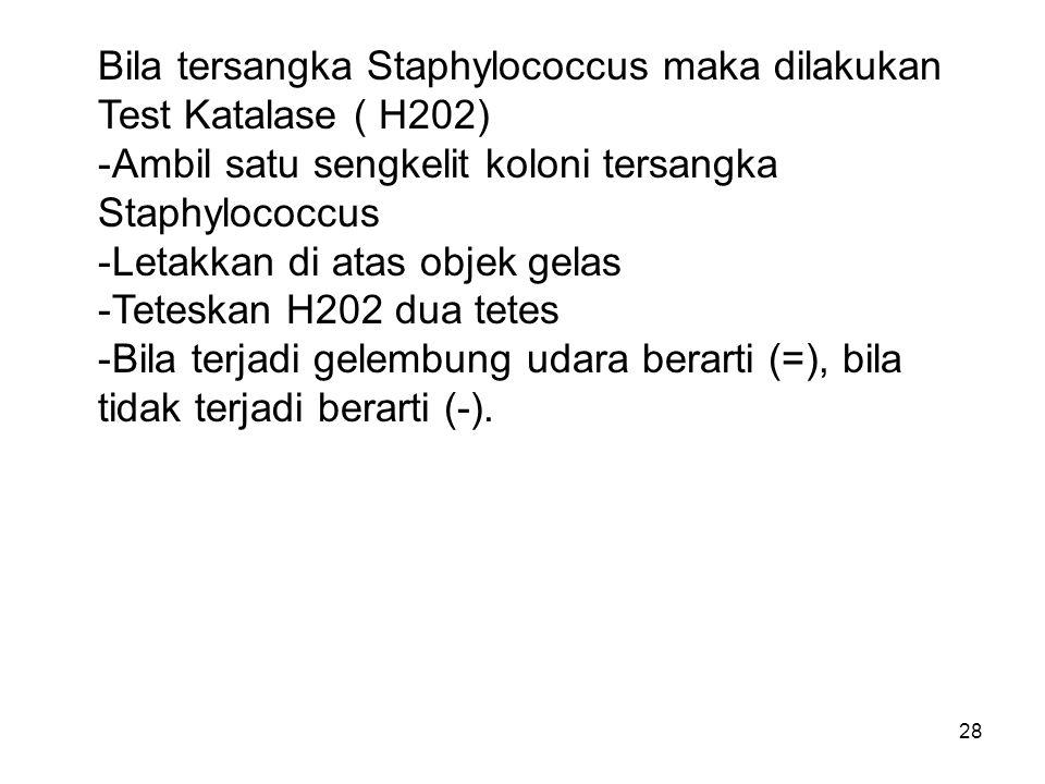 Bila tersangka Staphylococcus maka dilakukan Test Katalase ( H202)