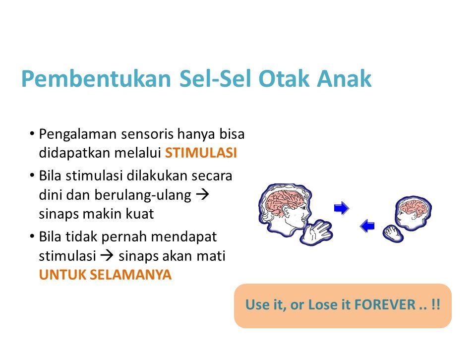 Pembentukan Sel-Sel Otak Anak