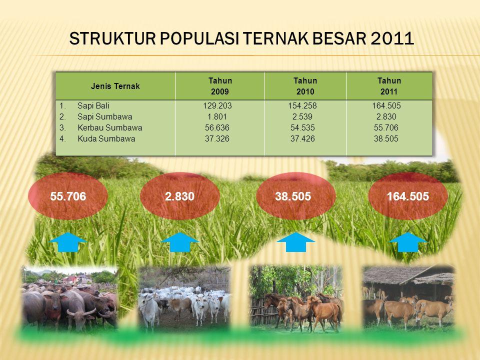 STRUKTUR POPULASI TERNAK BESAR 2011
