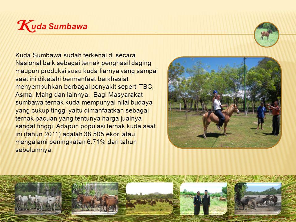 uda Sumbawa K.