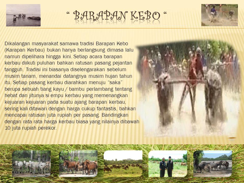 BARAPAN KEBO