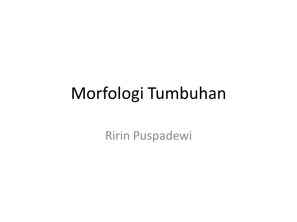 Morfologi Tumbuhan Ririn Puspadewi
