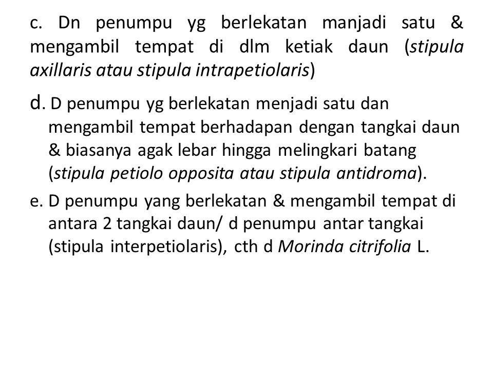 c. Dn penumpu yg berlekatan manjadi satu & mengambil tempat di dlm ketiak daun (stipula axillaris atau stipula intrapetiolaris)