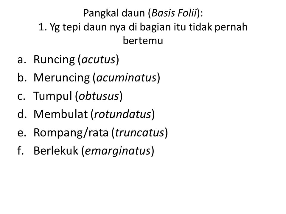 Meruncing (acuminatus) Tumpul (obtusus) Membulat (rotundatus)