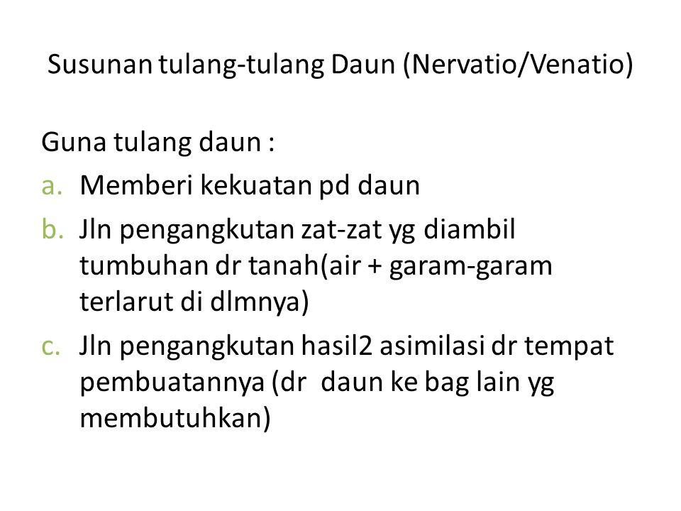 Susunan tulang-tulang Daun (Nervatio/Venatio)