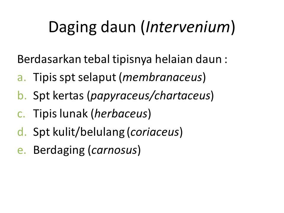Daging daun (Intervenium)