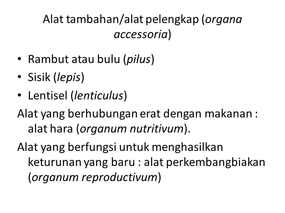 Alat tambahan/alat pelengkap (organa accessoria)