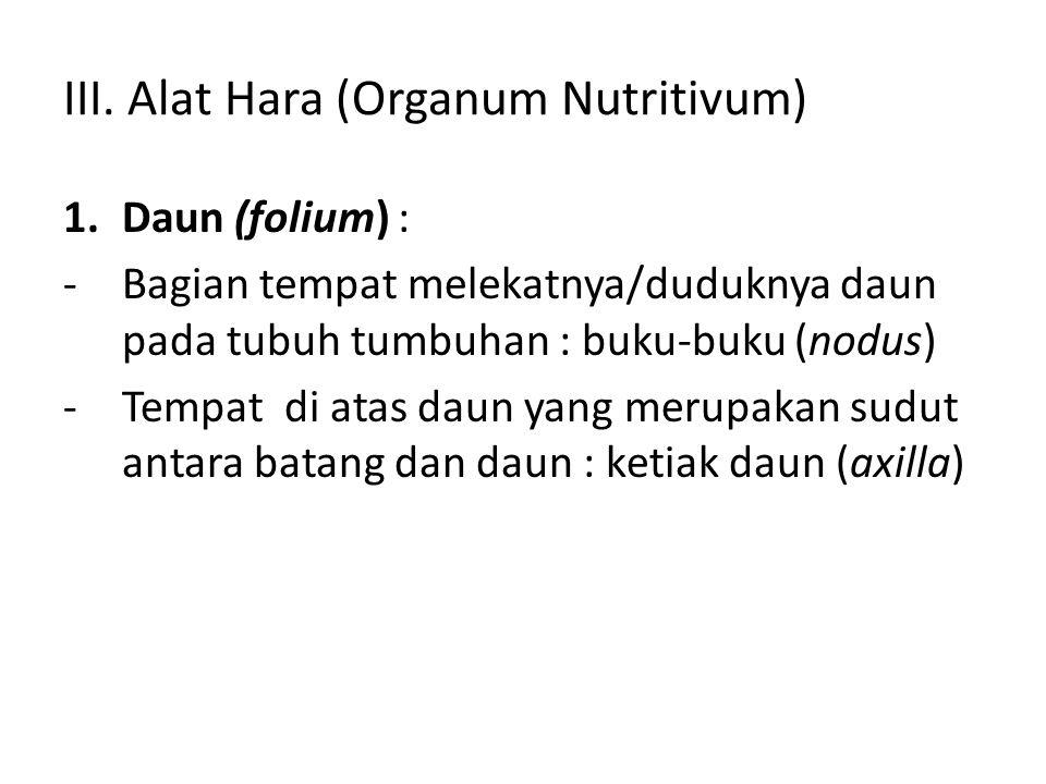 III. Alat Hara (Organum Nutritivum)