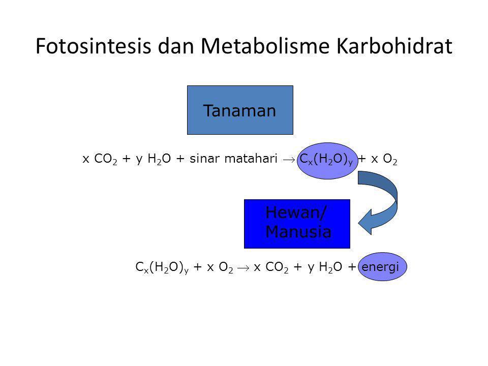 Fotosintesis dan Metabolisme Karbohidrat
