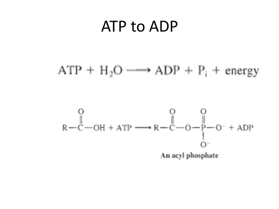 ATP to ADP
