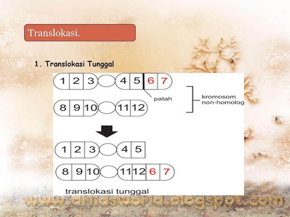Translokasi. Duplikasi 1. Translokasi Tunggal