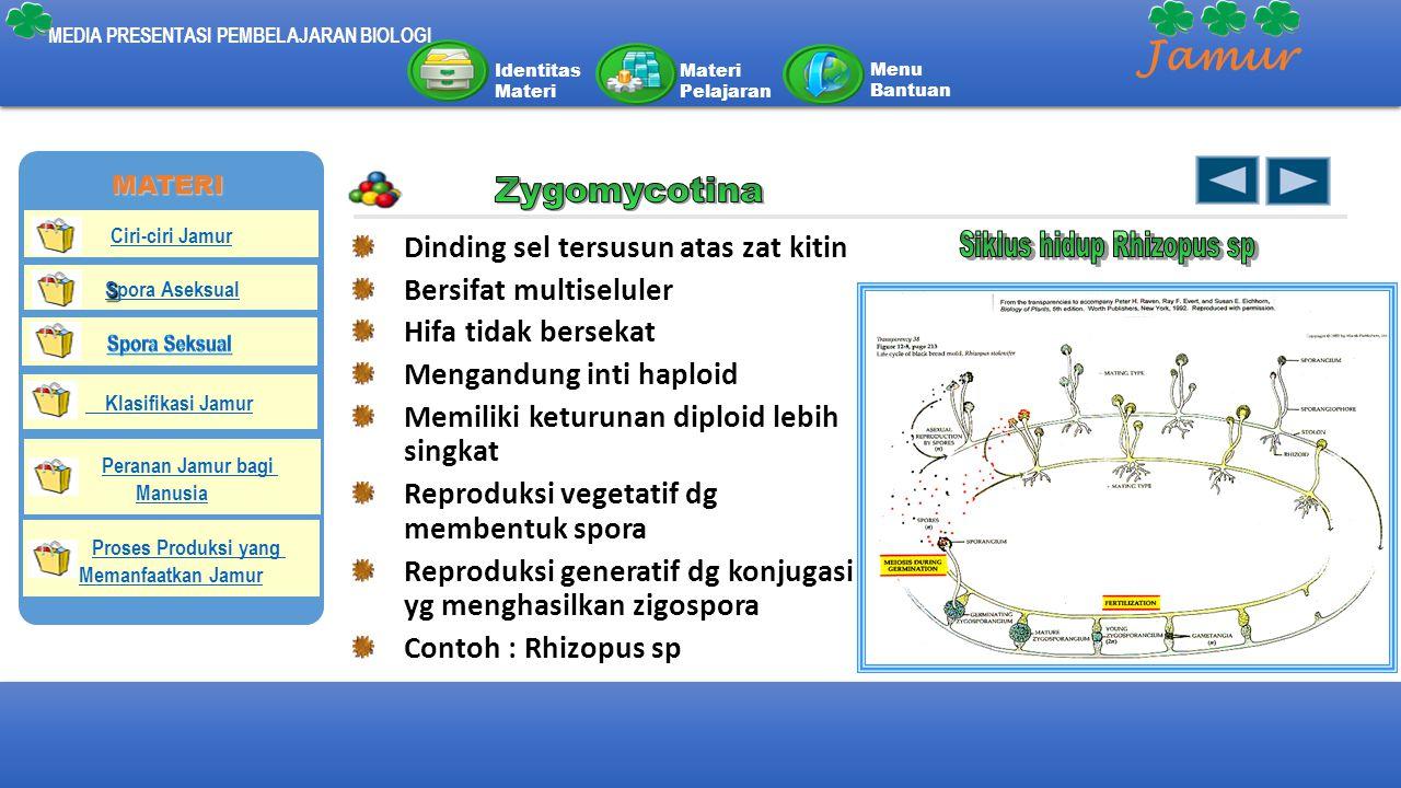 Siklus hidup Rhizopus sp