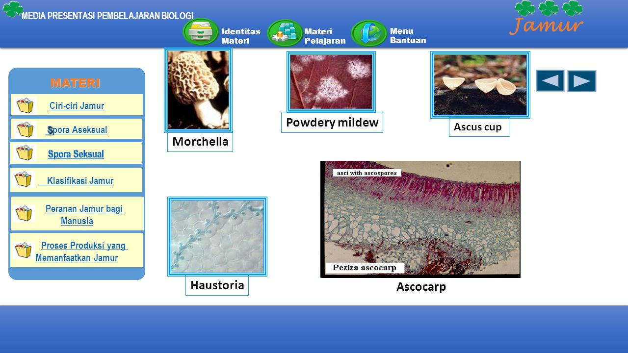 Jamur Powdery mildew Morchella Haustoria Ascocarp MATERI Ascus cup