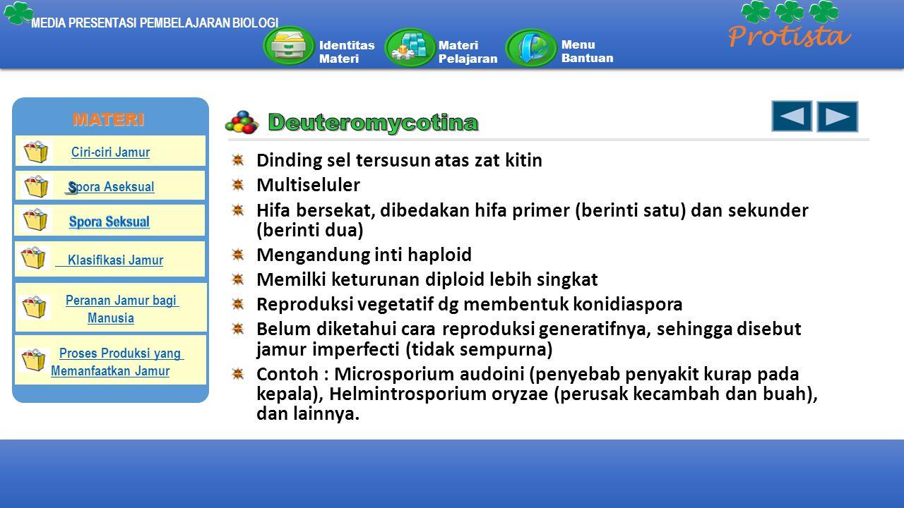 Protista Deuteromycotina Dinding sel tersusun atas zat kitin