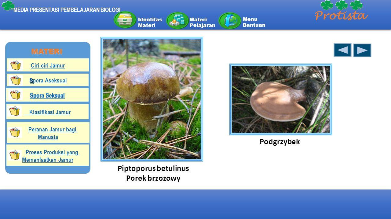 Piptoporus betulinus Porek brzozowy