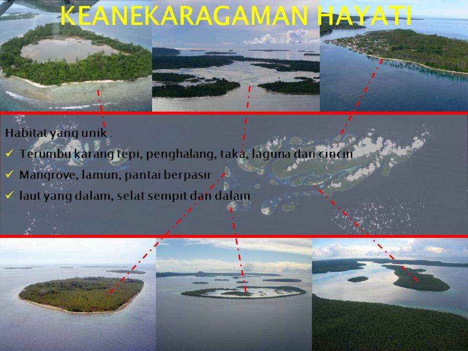 Habitat unik KEANEKARAGAMAN HAYATI Habitat yang unik :