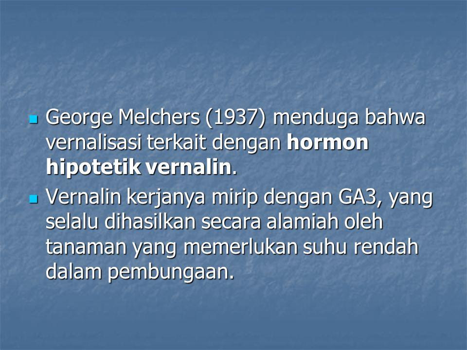 George Melchers (1937) menduga bahwa vernalisasi terkait dengan hormon hipotetik vernalin.