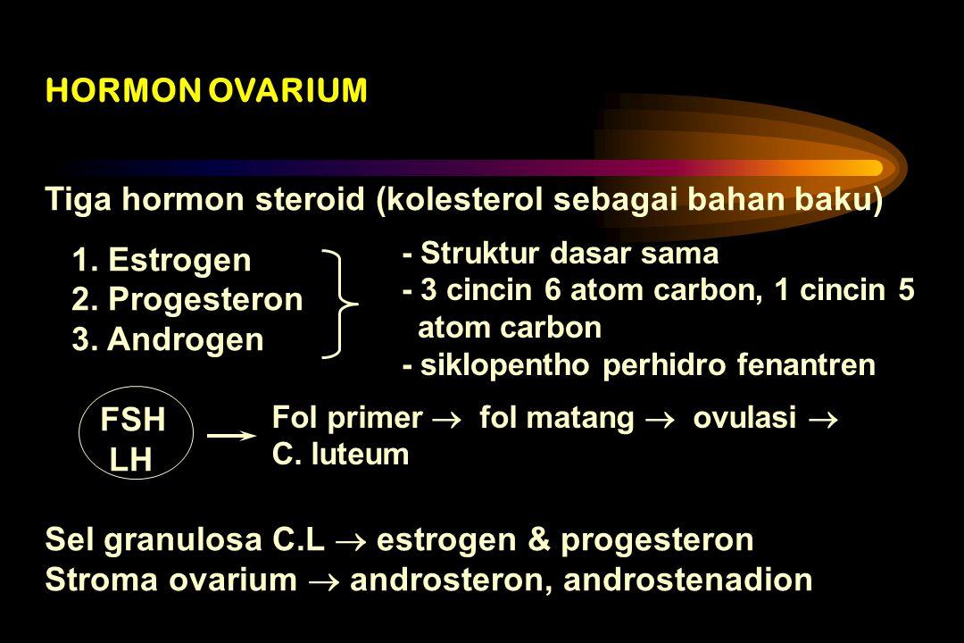 Tiga hormon steroid (kolesterol sebagai bahan baku) 1. Estrogen