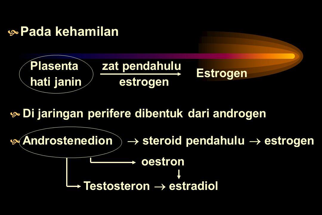 Pada kehamilan Plasenta zat pendahulu hati janin estrogen Estrogen