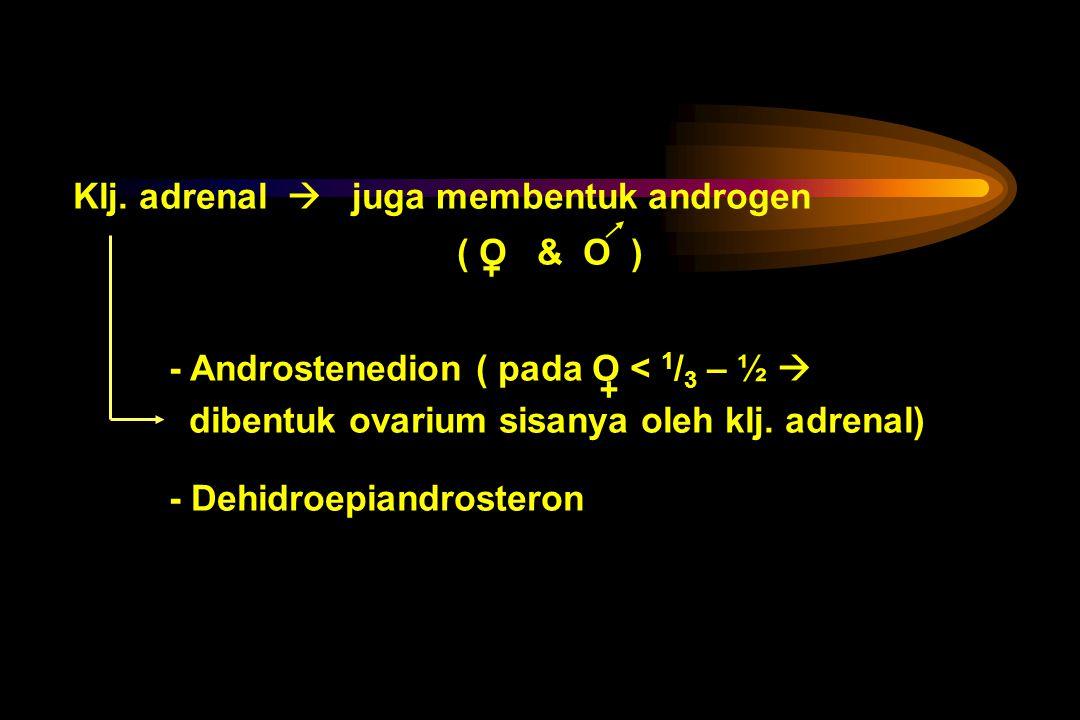 Klj. adrenal  juga membentuk androgen ( O & O )