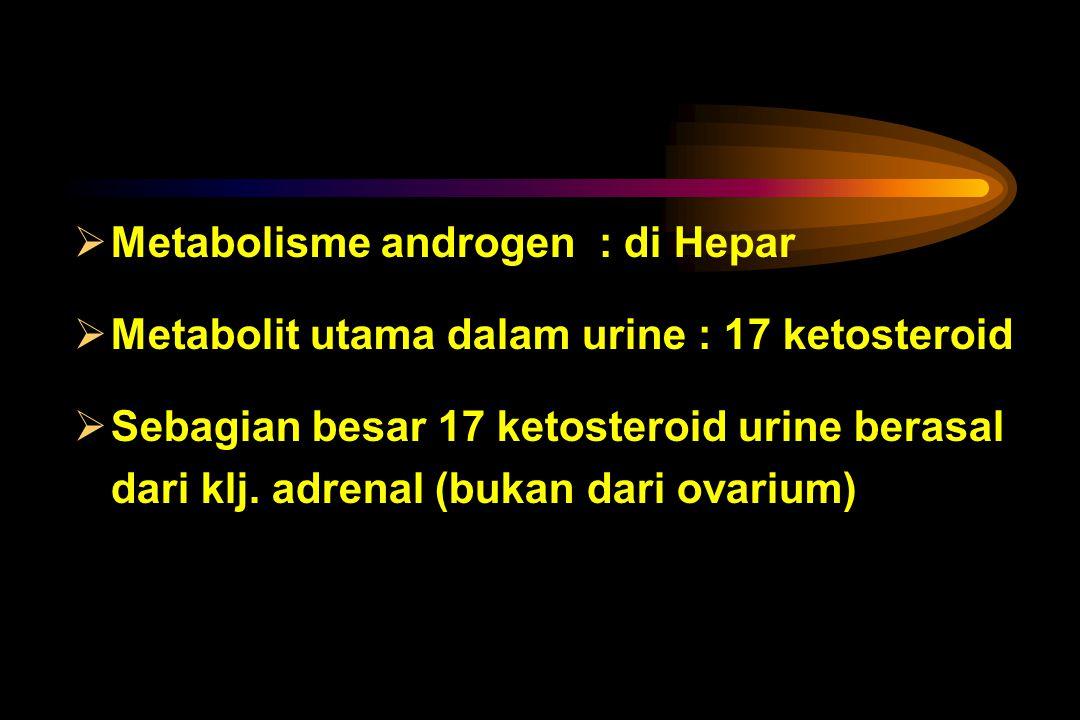 Metabolisme androgen : di Hepar