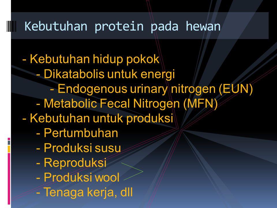 Kebutuhan protein pada hewan