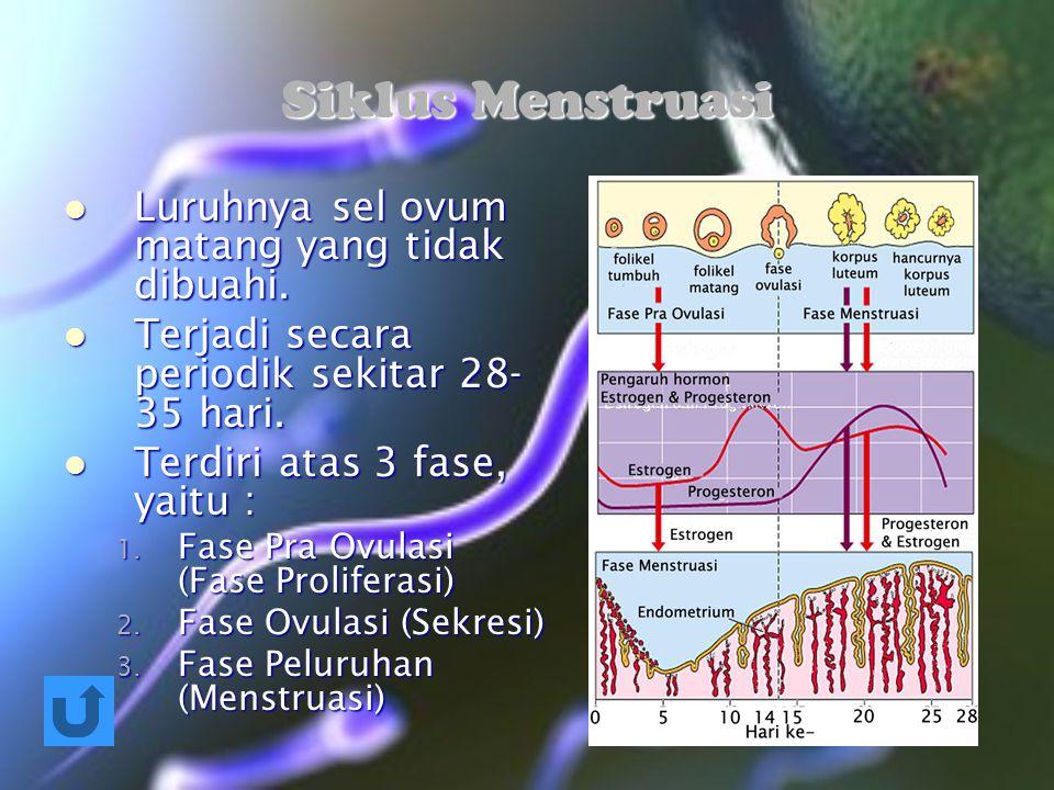Siklus Menstruasi Luruhnya sel ovum matang yang tidak dibuahi.