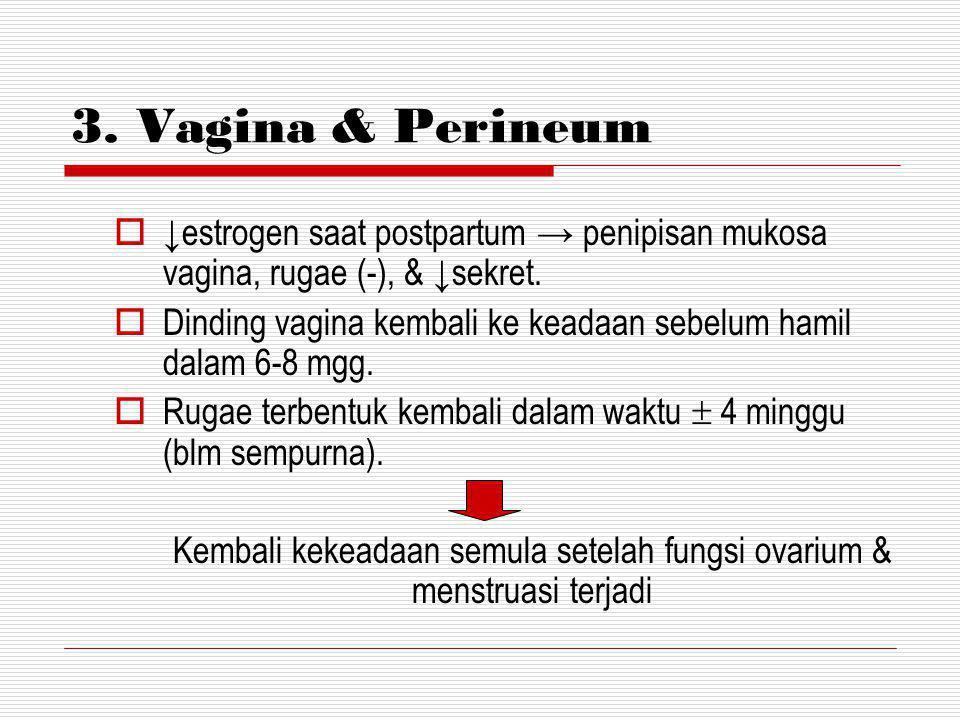 Kembali kekeadaan semula setelah fungsi ovarium & menstruasi terjadi