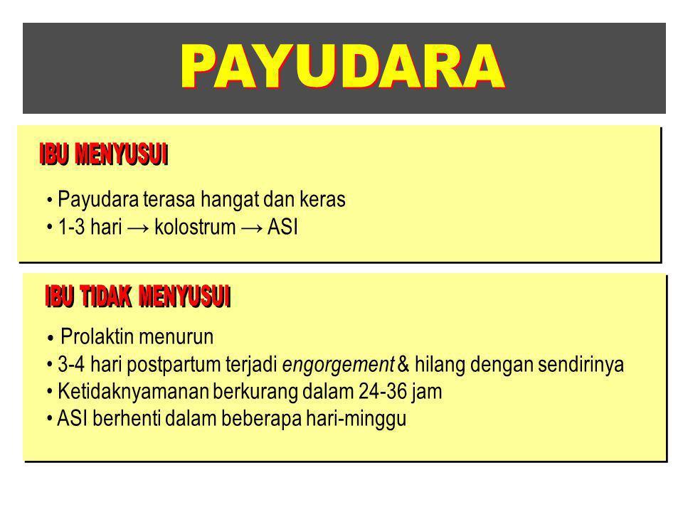 PAYUDARA 1-3 hari → kolostrum → ASI
