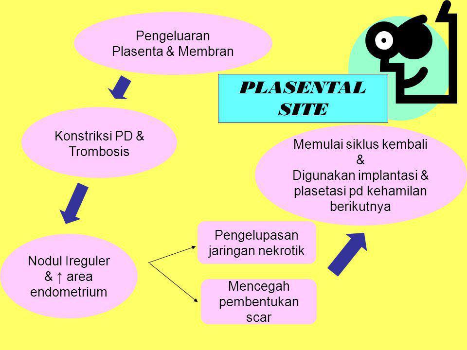 PLASENTAL SITE Pengeluaran Plasenta & Membran
