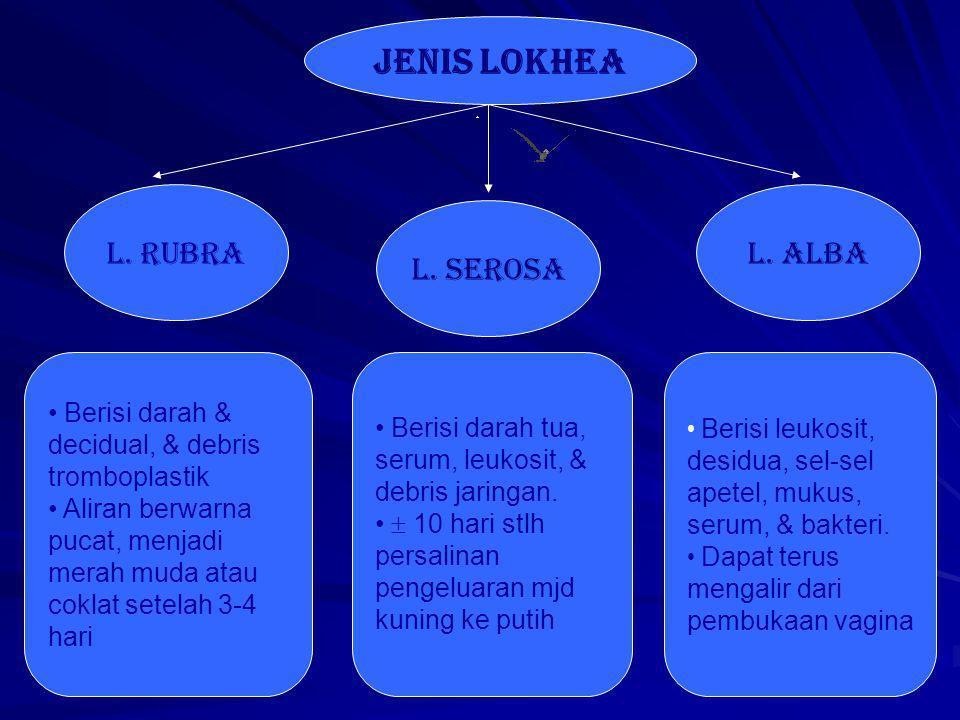 JENIS LOKHEA l. rUBRA L. ALBA l. sEROSA