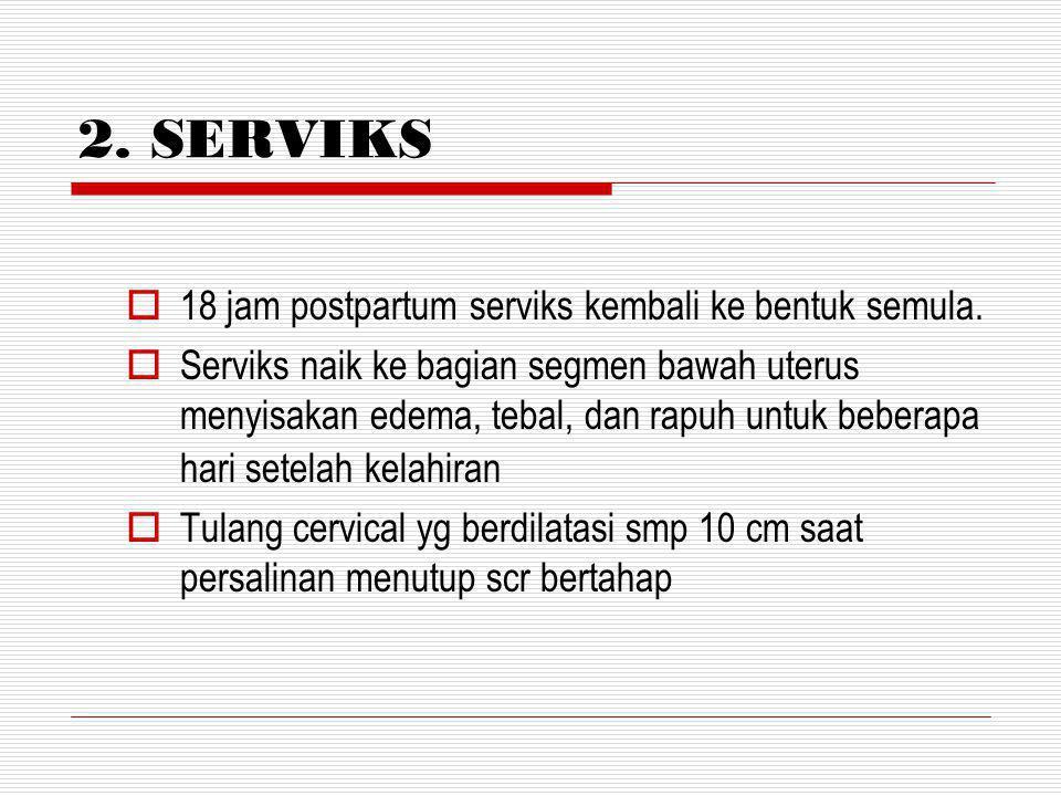 2. SERVIKS 18 jam postpartum serviks kembali ke bentuk semula.