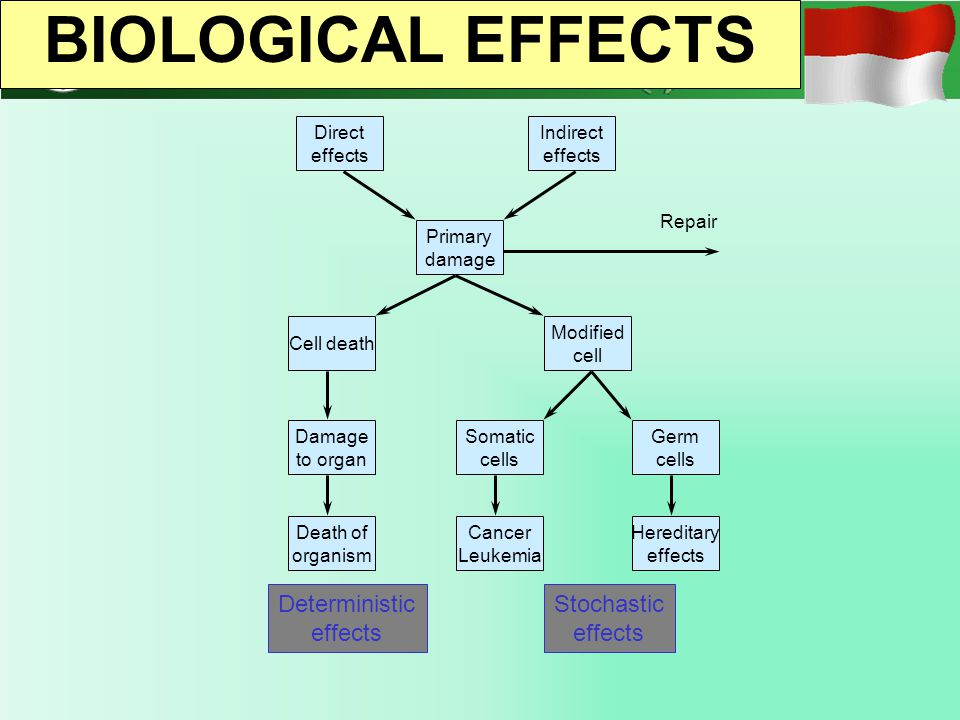 BIOLOGICAL EFFECTS Deterministic effects Stochastic effects Direct