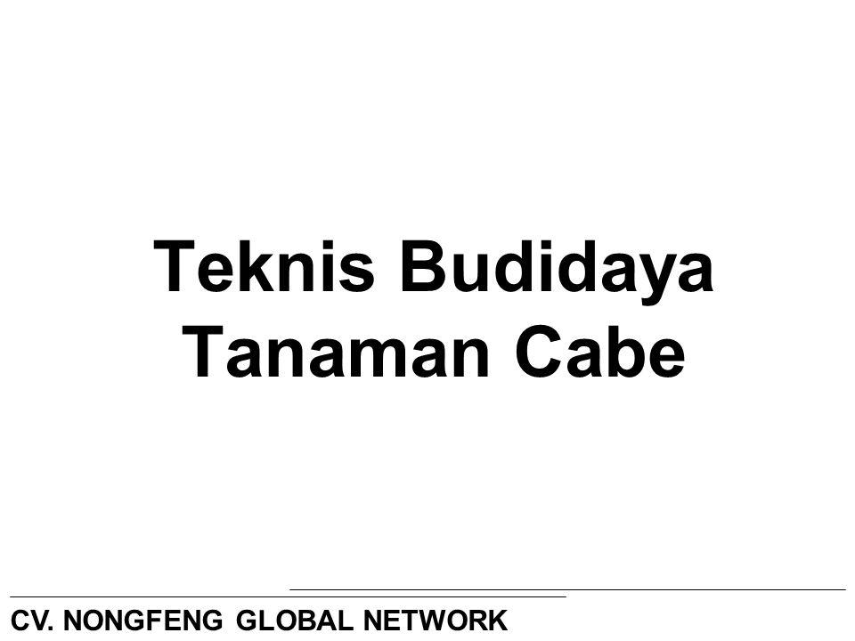 Teknis Budidaya Tanaman Cabe