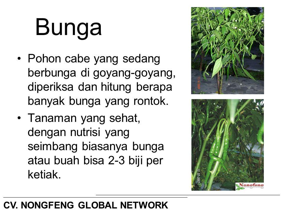 Bunga Pohon cabe yang sedang berbunga di goyang-goyang, diperiksa dan hitung berapa banyak bunga yang rontok.