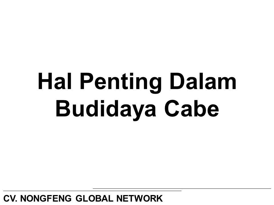 Hal Penting Dalam Budidaya Cabe