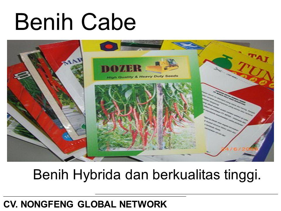 Benih Cabe Benih Hybrida dan berkualitas tinggi.