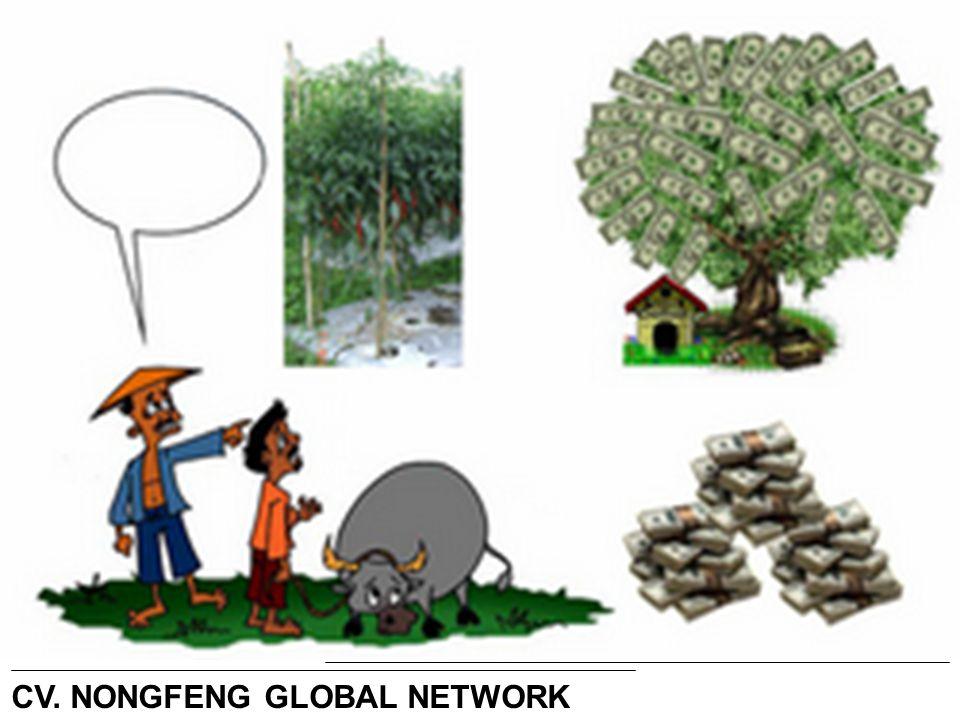 = CV. NONGFENG GLOBAL NETWORK Lihat… Ternyata pohon Cabe adalah