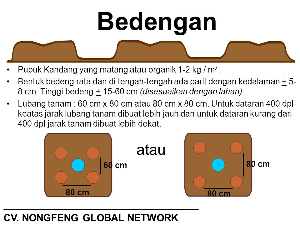 Bedengan atau CV. NONGFENG GLOBAL NETWORK