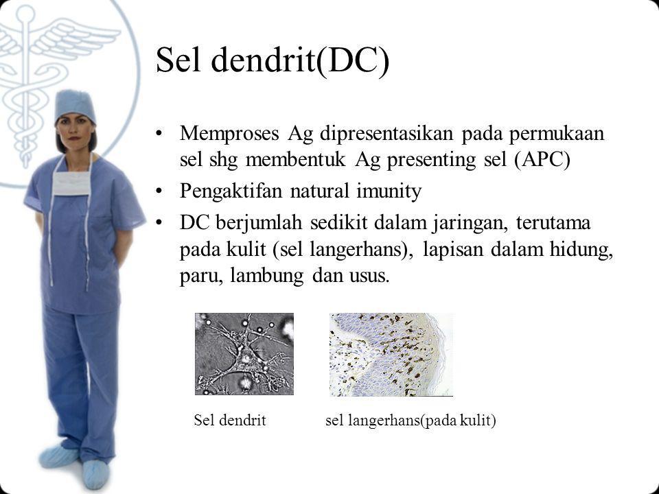Sel dendrit(DC) Memproses Ag dipresentasikan pada permukaan sel shg membentuk Ag presenting sel (APC)