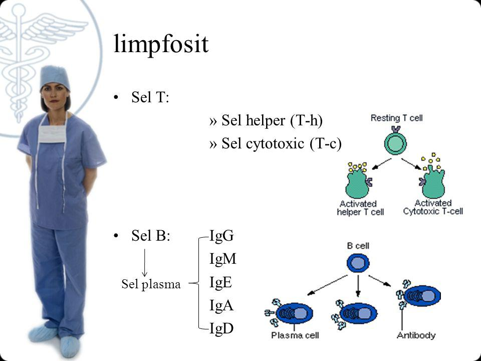 limpfosit Sel T: Sel helper (T-h) Sel cytotoxic (T-c) Sel B: IgG IgM