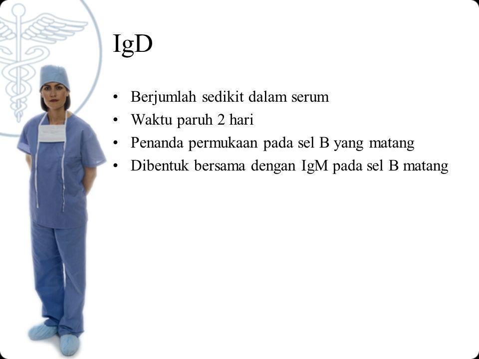 IgD Berjumlah sedikit dalam serum Waktu paruh 2 hari