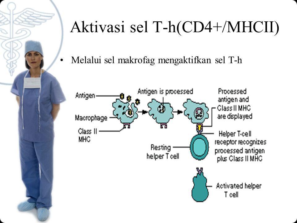 Aktivasi sel T-h(CD4+/MHCII)