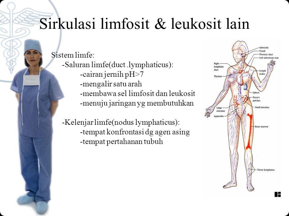 Sirkulasi limfosit & leukosit lain