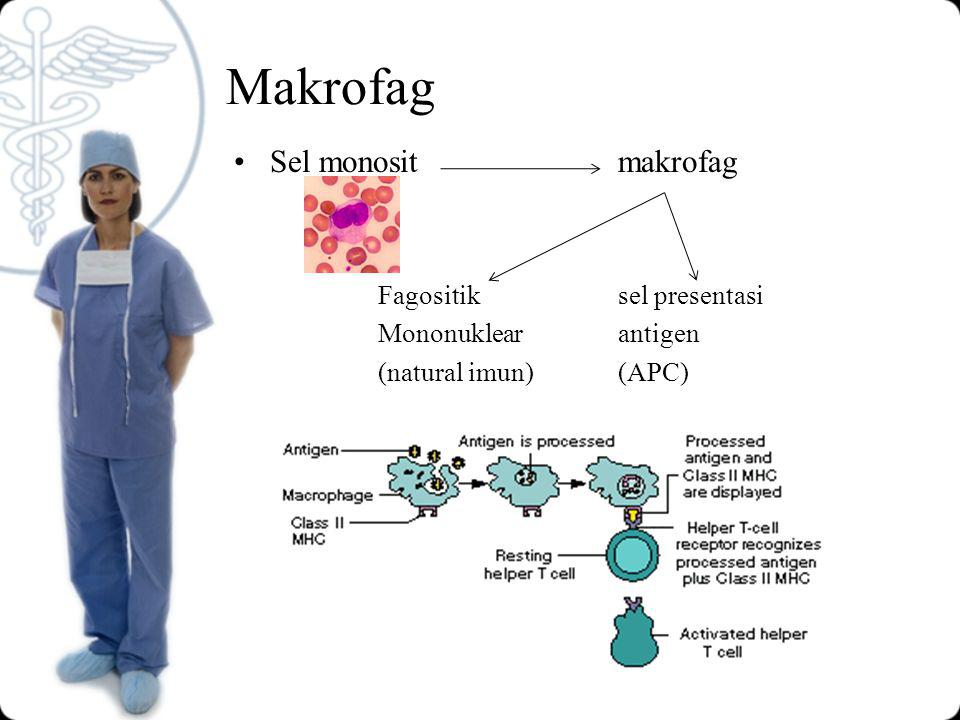 Makrofag Sel monosit makrofag Fagositik sel presentasi