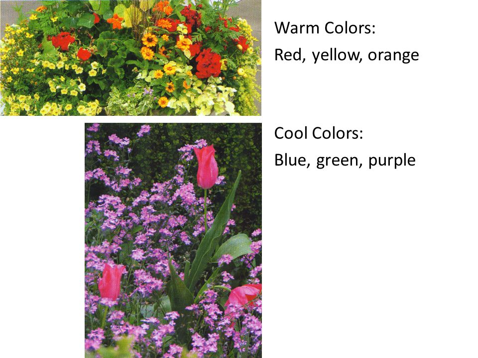 Warm Colors: Red, yellow, orange Cool Colors: Blue, green, purple