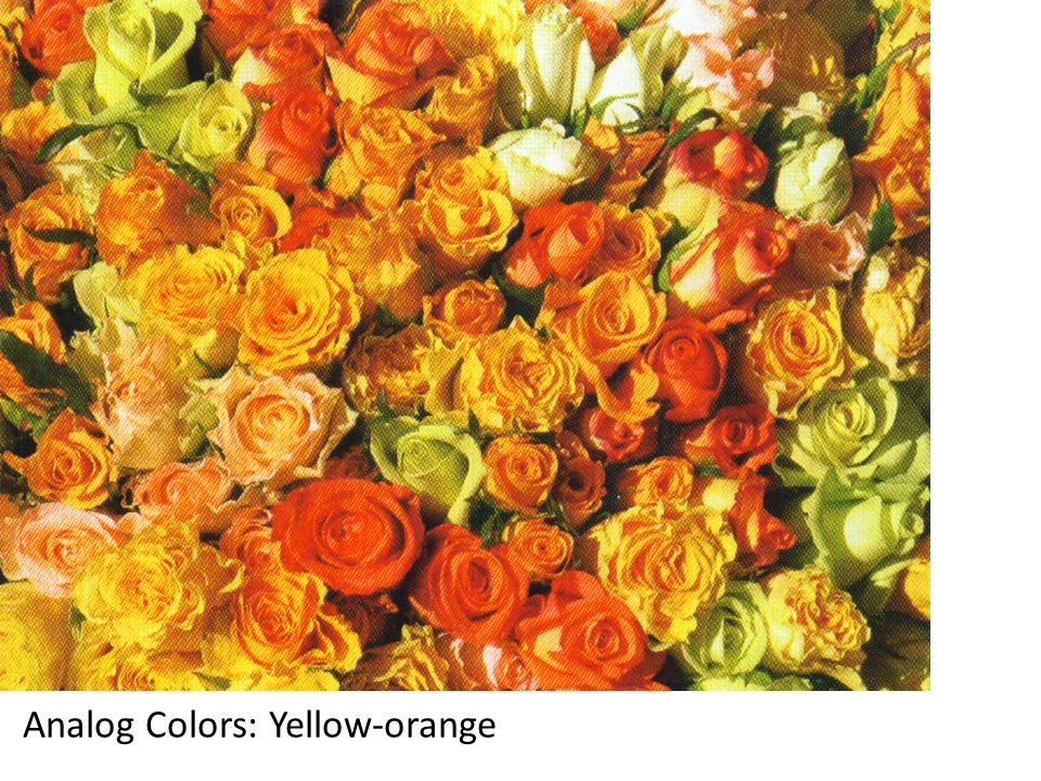 Analog Colors: Yellow-orange